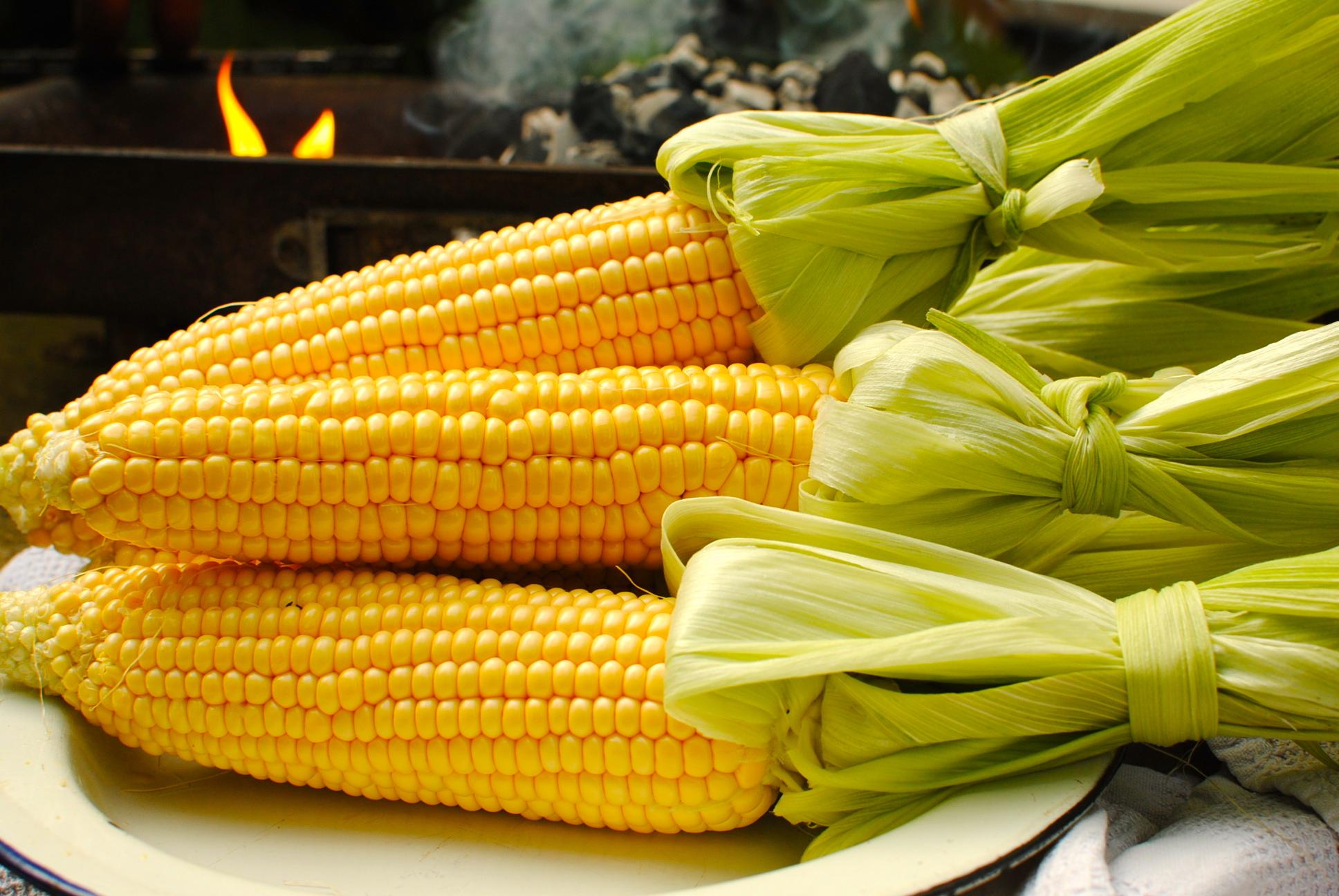 Can Dog Eat Sweet Corn Kernels